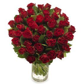 Lange rode rozen