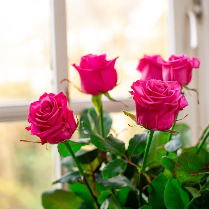 roze rozen raam