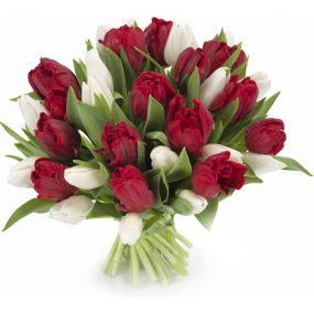 Tulpen wit en rood middel