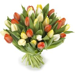 lichte tulpen gemengd middel