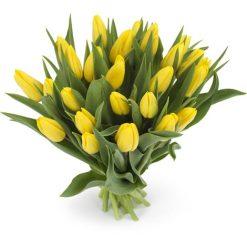 tulpen geel middel