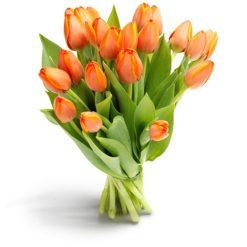tulpen oranje middel