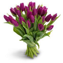 tulpen paars middel