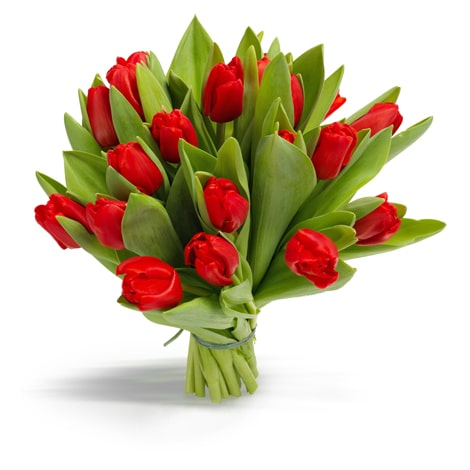 tulpen rood middel