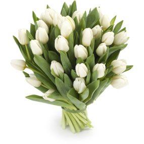 tulpen wit middel