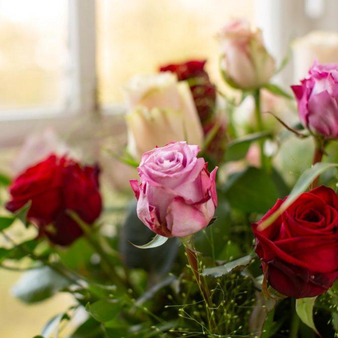 licht gekleurde rozen in het raam