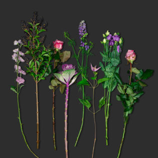 verrassingsboeket lila