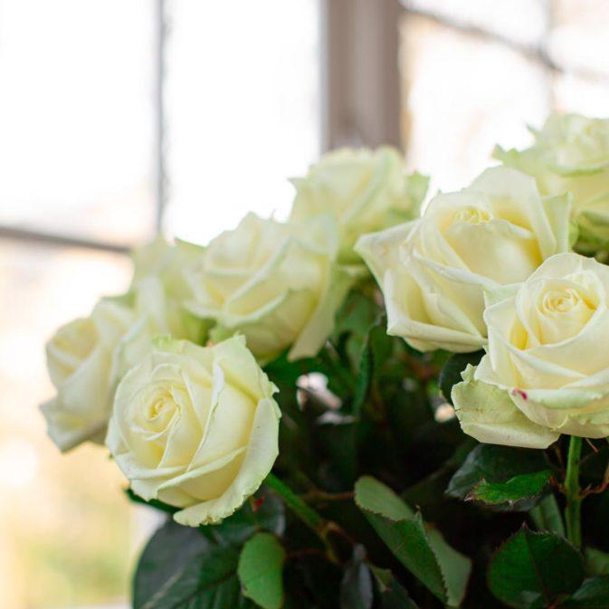 witte rozen in het raam 1