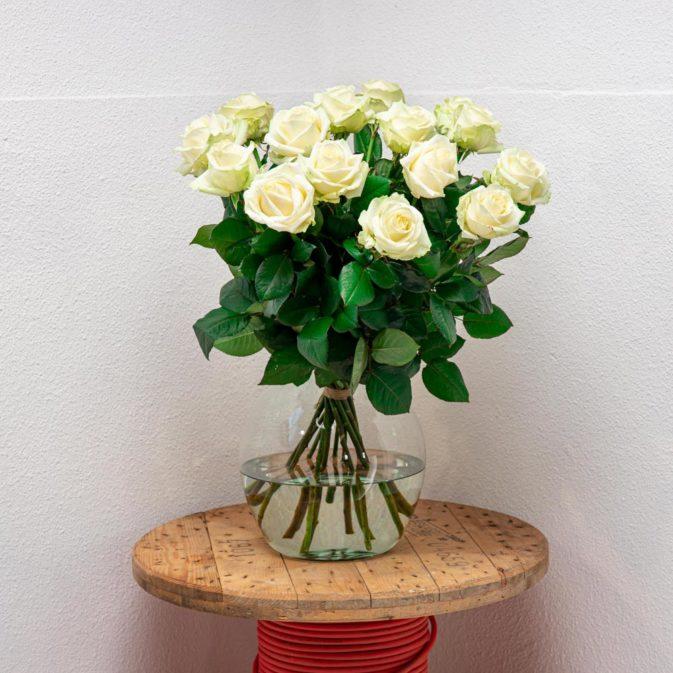 witte rozen vooraanzicht