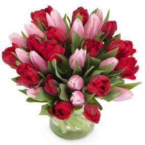 liefdevolle tulpen middel