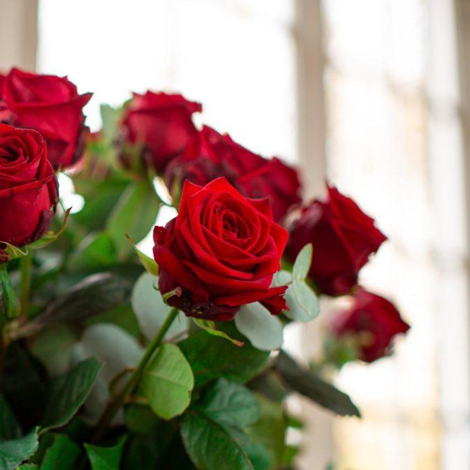 grote bos rode rozen ultieme liefde 1