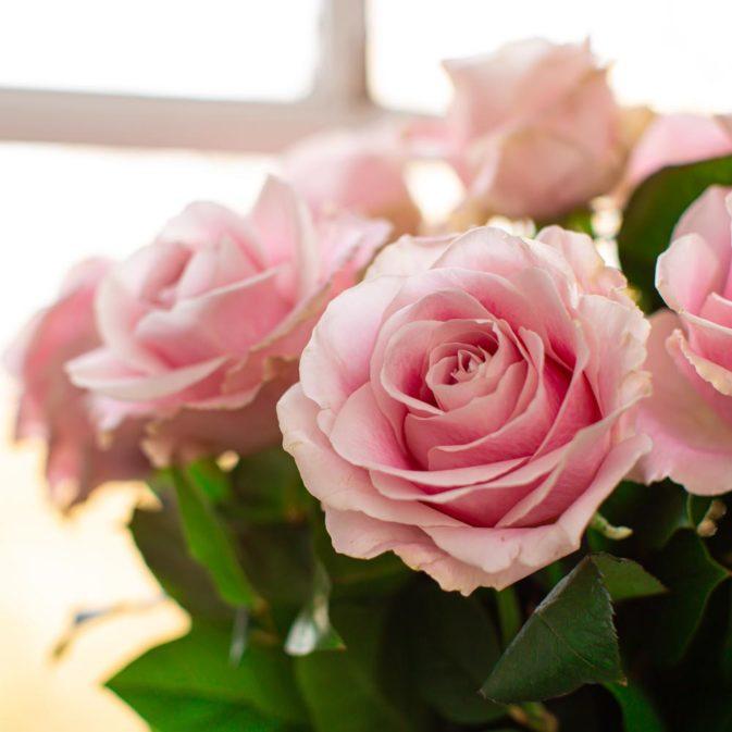 lichtroze rozen 1